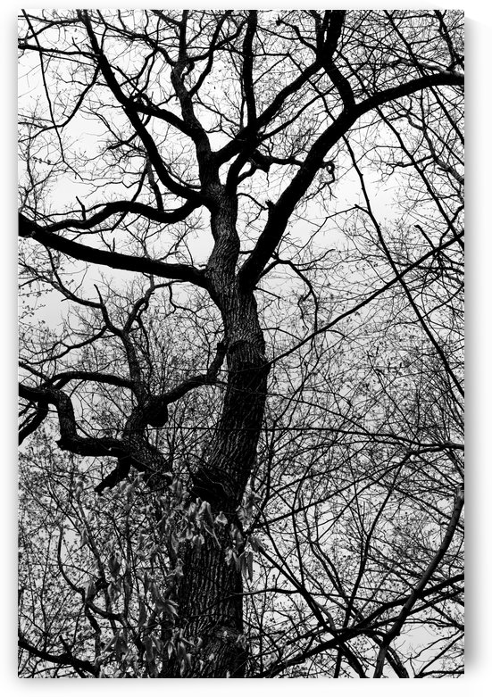 Waiting for Spring BW High Contrast 050419 by Mary Bedy