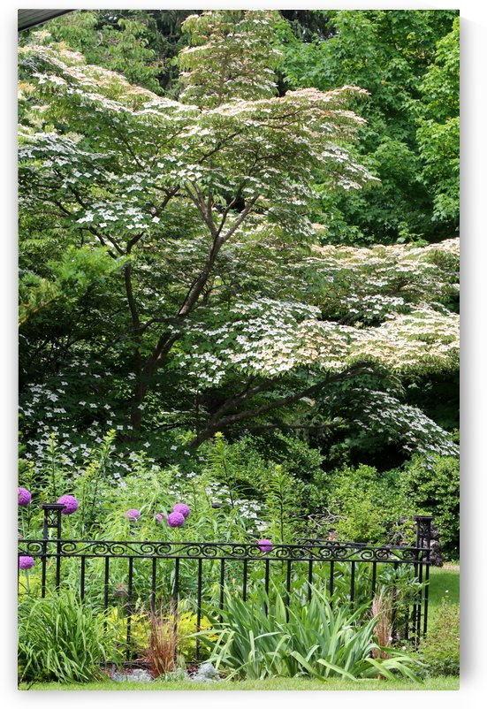Garden with Dogwood 2018 by Mary Bedy