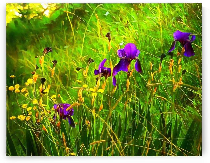 Moody Purple Iris by Dorothy Berry-Lound