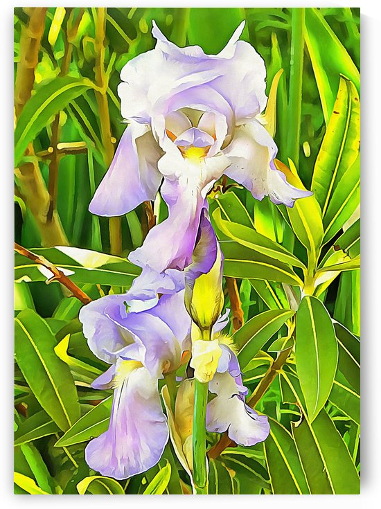 Bearded Iris Seeing Double by Dorothy Berry-Lound