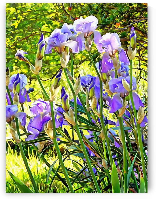 Iris Edging The Grass by Dorothy Berry-Lound