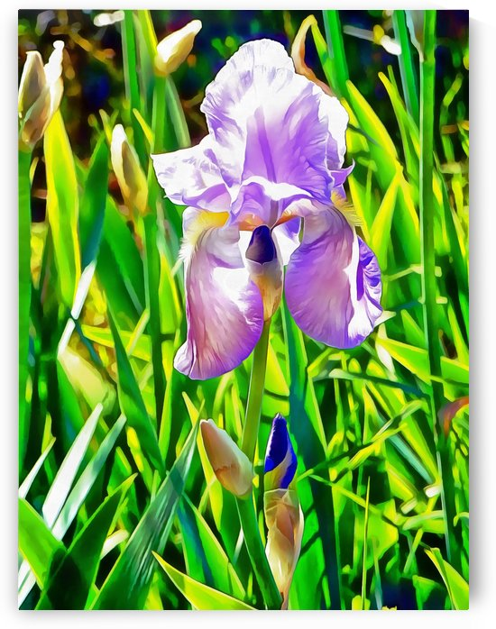 Transparent Blue Iris by Dorothy Berry-Lound