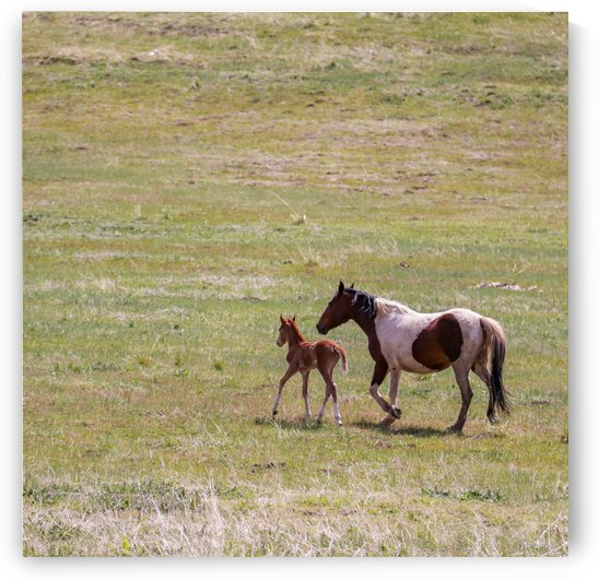 Horses by Wilken Photos