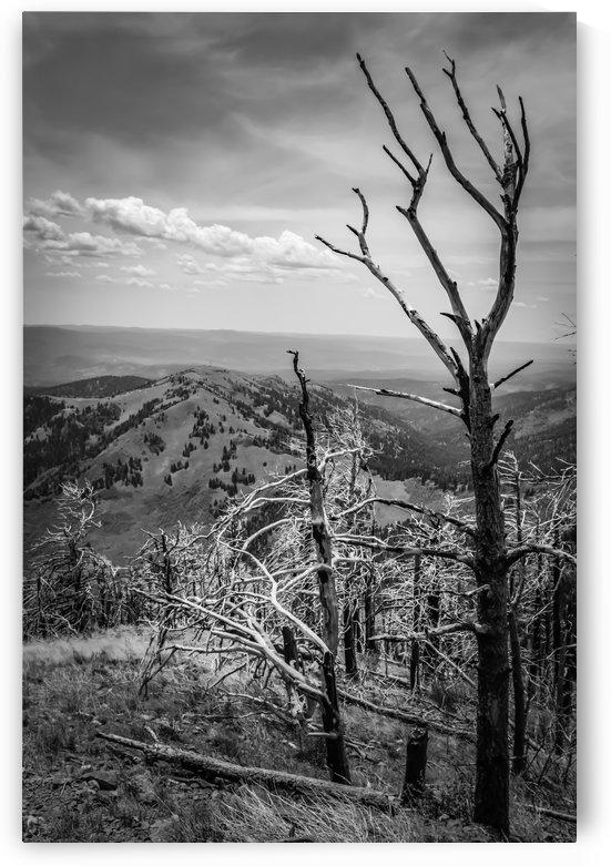 New Mexico Contrast by Wilken Photos