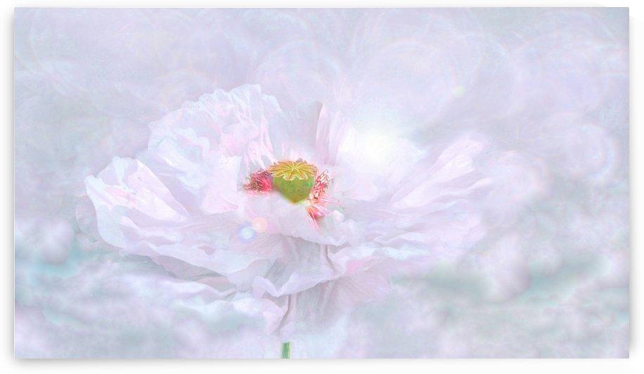 Floral 52019C by Richard D. Jungst