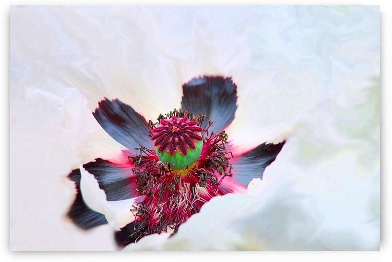Floral 52019D by Richard D. Jungst