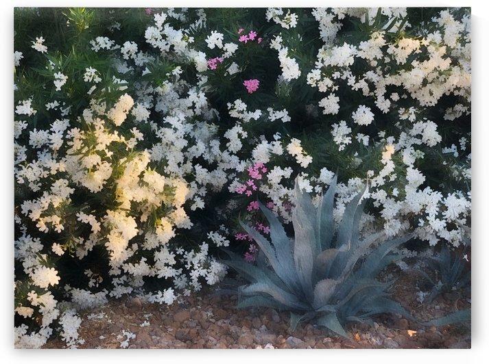 Gardenscape by PedroVit