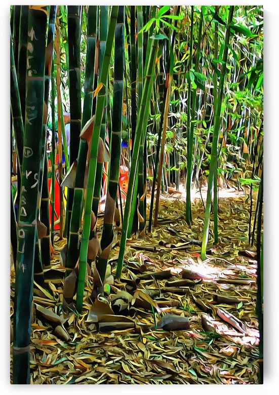 Bamboo in Jardin Majorelle Marrakech 3 by Dorothy Berry-Lound