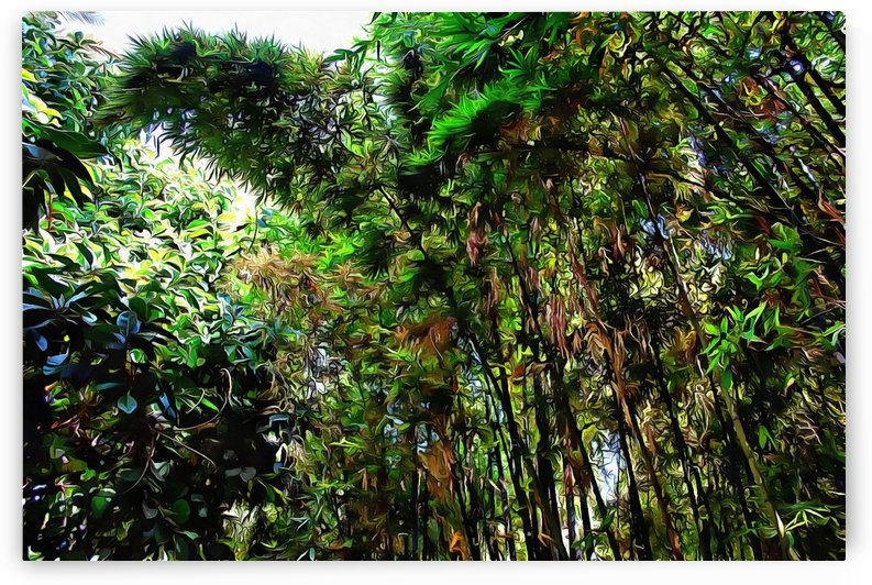 Bamboo in Jardin Majorelle Marrakech 4 by Dorothy Berry-Lound