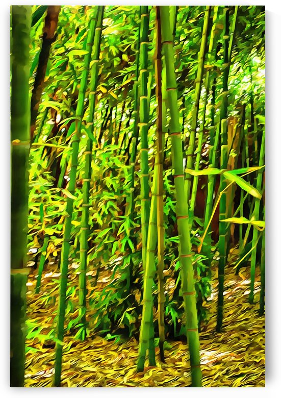 Bamboo in Jardin Majorelle Marrakech 2 by Dorothy Berry-Lound