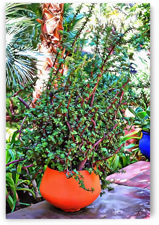 Colorful Plant Pots Marrakesh 10 by Dorothy Berry-Lound