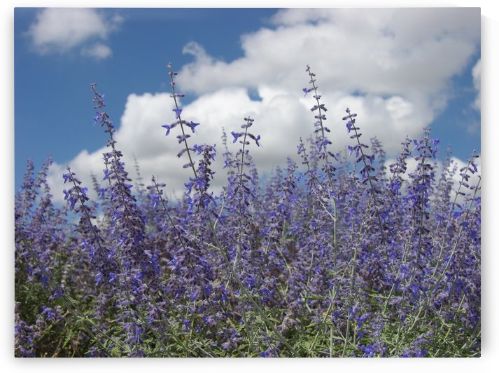 New Mexico Purple Flora Photograph by Katherine Lindsey Photography