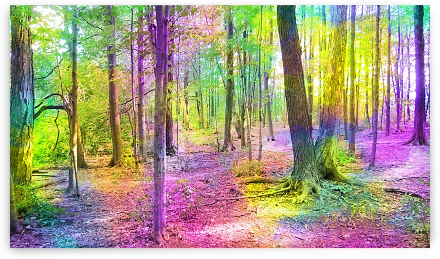 Woods Trees by NganHongTruong