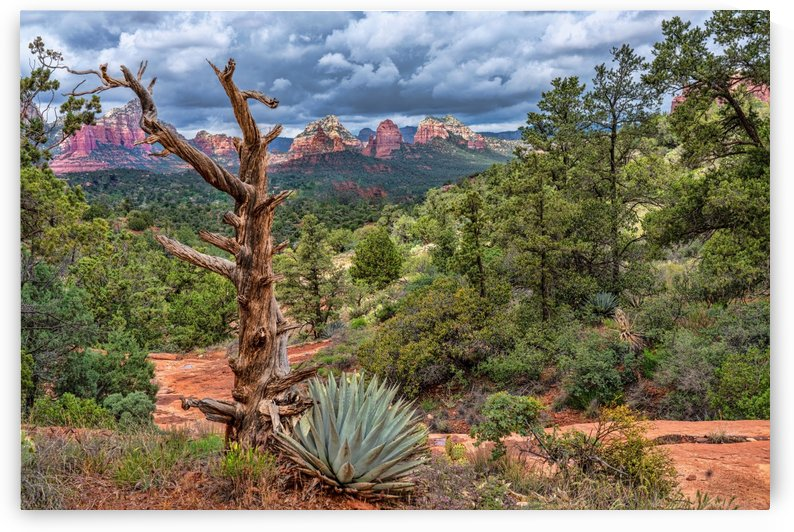 Sedona Overlook by James Radford