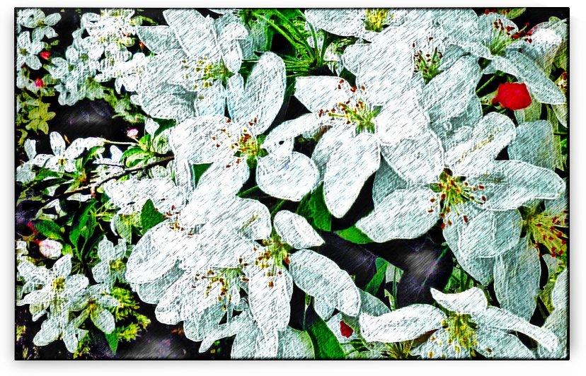 Beautiful Flower Art  by Jeremy Lyman