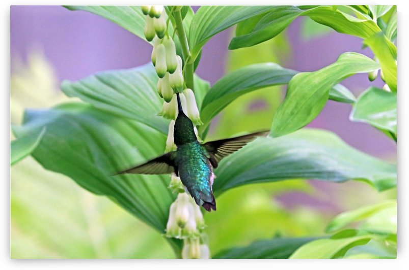 Hummer And Solomon Seal by Deb Oppermann