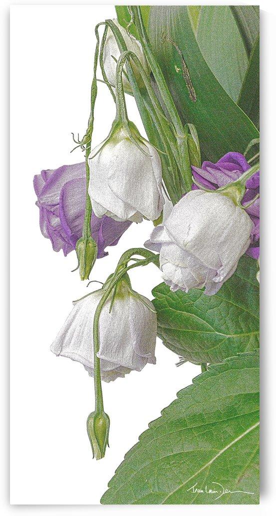Les fleurs mortes by Jean-Louis Desrosiers
