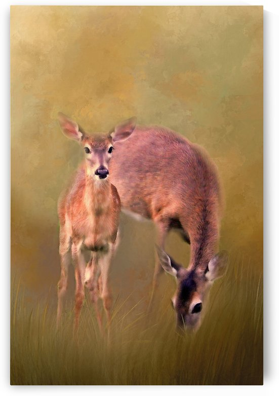 Doe Mom And Offspring by HH Photography of Florida