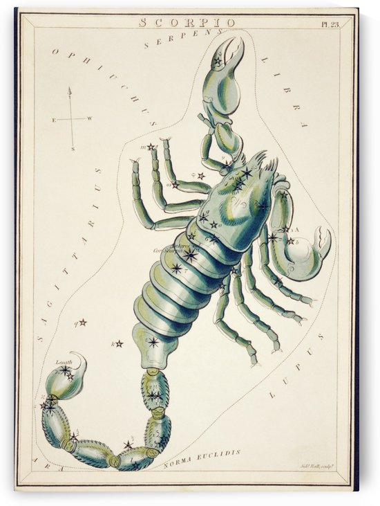 Scorpio by ABConcepts