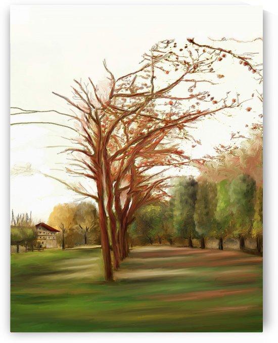Fall Leafless Trees by ANA BORRAS