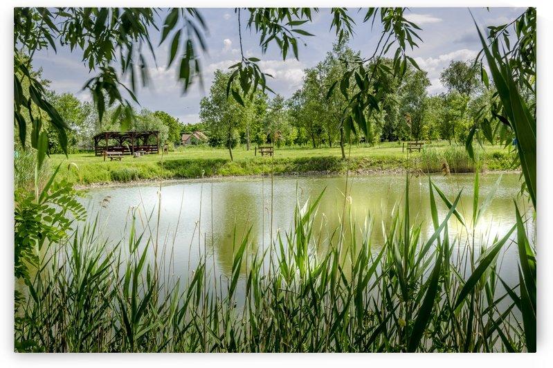 Summer Lake by Ann Romanenko