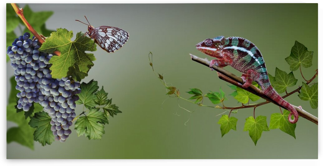 Intrigue   Butterfly and chameleon by Radiy