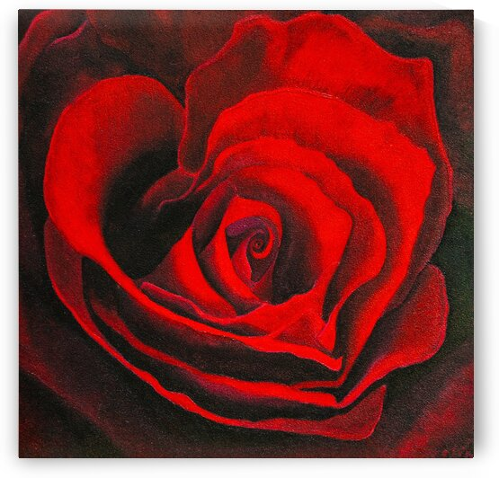 ROSE 04 RED by Keith Gustin