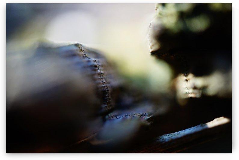 Abstract Macro Nature Photography 106 by Richard Vloemans Macro Photography
