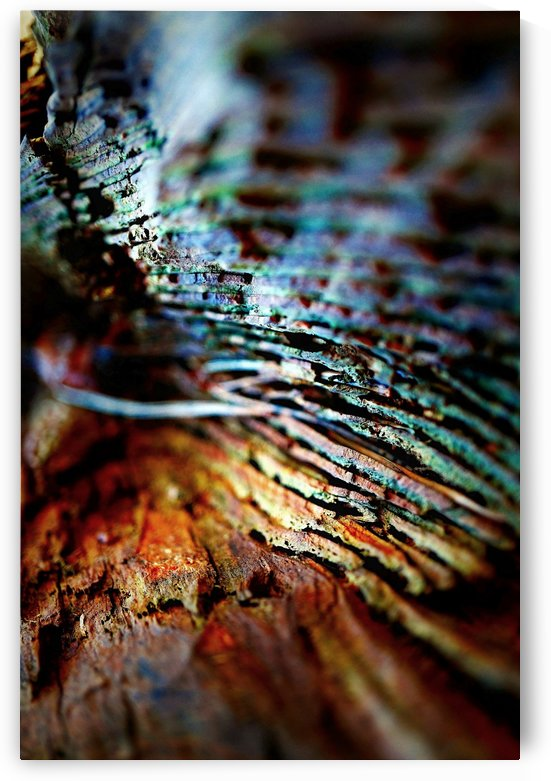 Abstract Macro Nature Photography 104 by Richard Vloemans Macro Photography