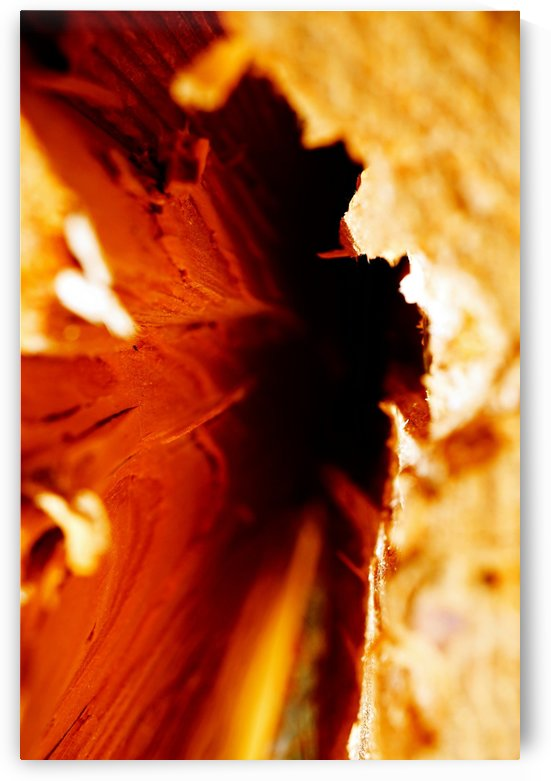 Abstract Macro Nature Photography 86 by Richard Vloemans Macro Photography
