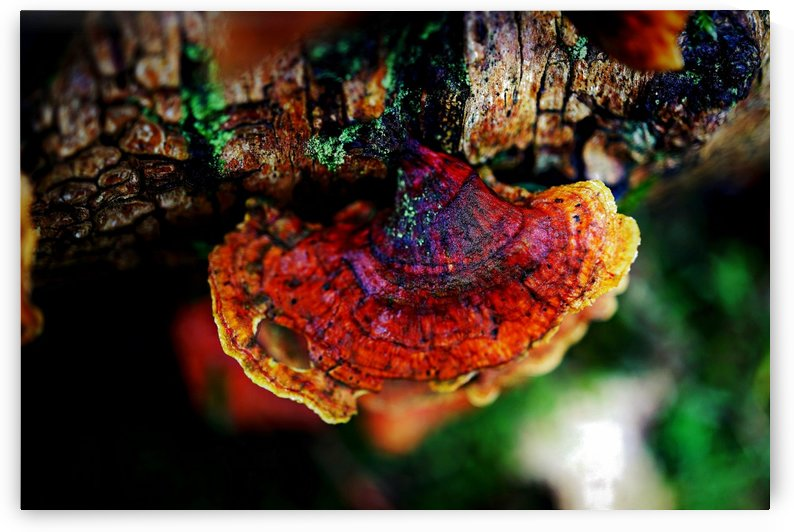 Pop Color Fungi 04 by Richard Vloemans Macro Photography