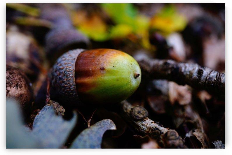 Macro Nature Scene 03 by Richard Vloemans Macro Photography