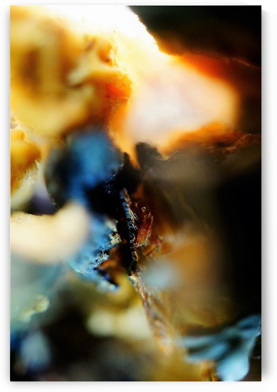 Abstract Macro Nature Photography 64 by Richard Vloemans Macro Photography