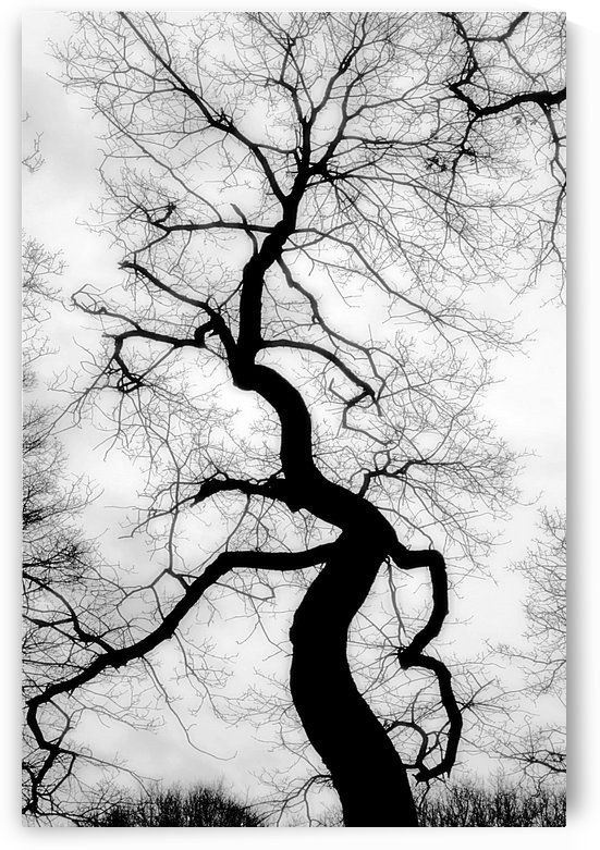 Black and White Abstract Tree by Richard Vloemans Macro Photography