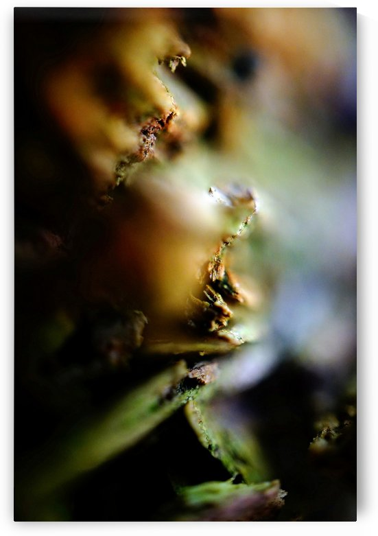 Abstract Macro Nature Photography 59 by Richard Vloemans Macro Photography