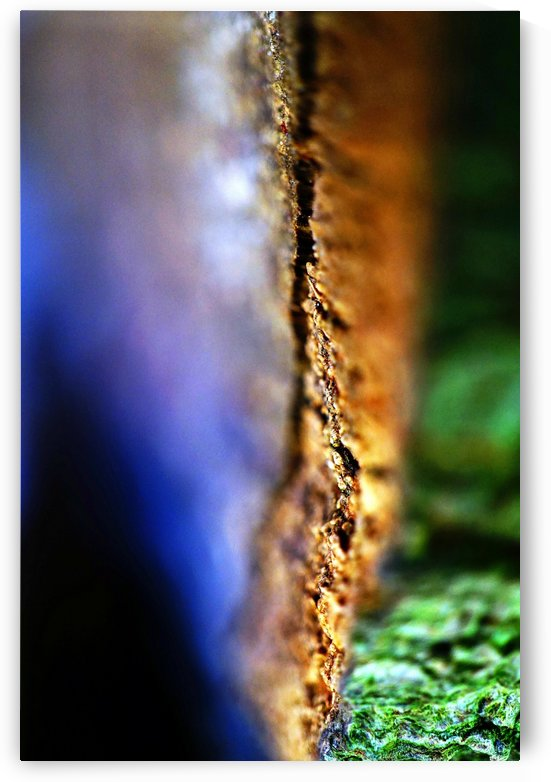 Abstract Macro Nature Photography 51 by Richard Vloemans Macro Photography