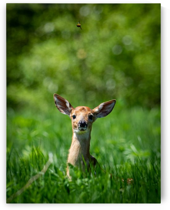 The Fawn and the Bumblebee by Jimmie Pedersen