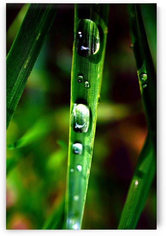 Macro Raindrop Photography Art 18 by Richard Vloemans Macro Photography