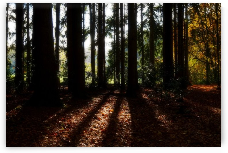 Fantasy Forest 04 by Richard Vloemans Macro Photography