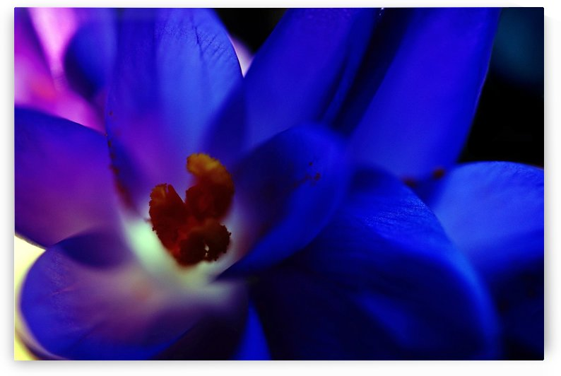 Pop Color Flowers 02 by Richard Vloemans Macro Photography