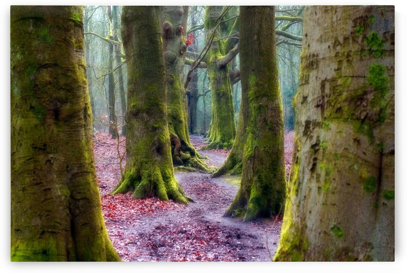 Fantasy Forest 03 by Richard Vloemans Macro Photography