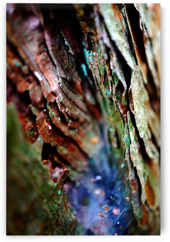 Abstract Macro Nature Photography 36 by Richard Vloemans Macro Photography