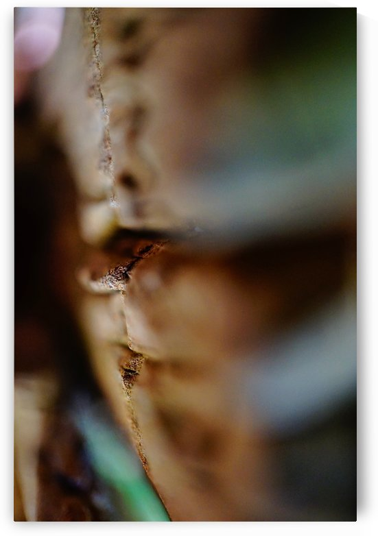 Abstract Macro Nature Photography 19 by Richard Vloemans Macro Photography