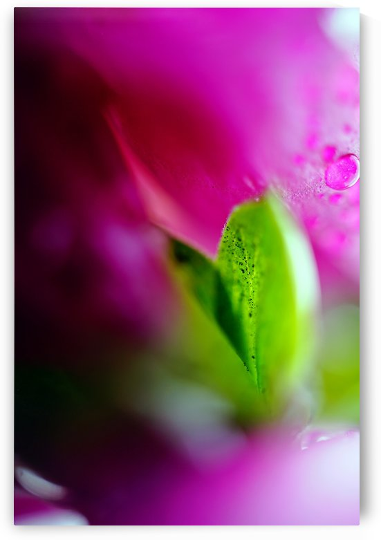 Abstract Macro Pop Colors 01 by Richard Vloemans Macro Photography