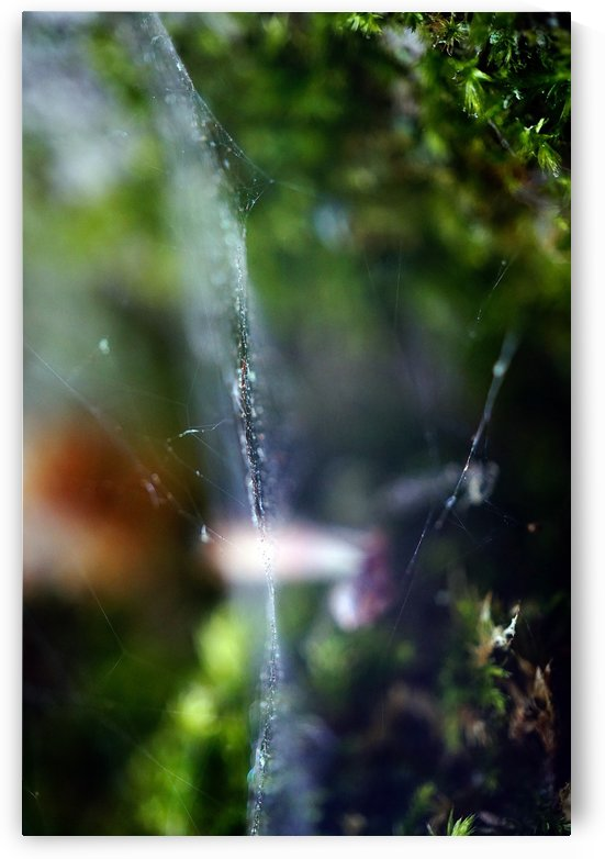 Spiders Landscape 02 by Richard Vloemans Macro Photography