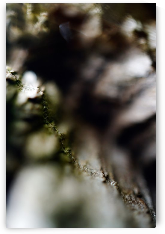 Abstract Macro Nature 01  by Richard Vloemans Macro Photography