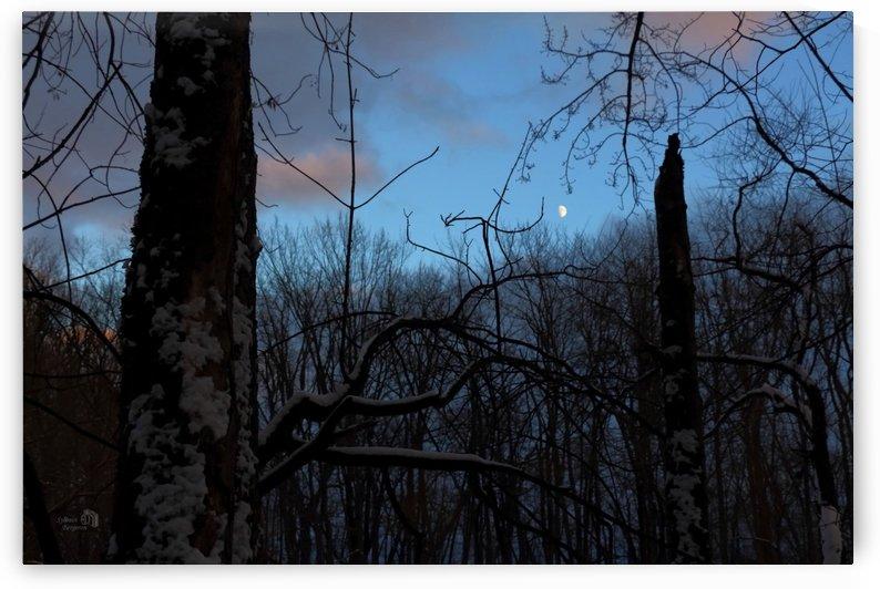 Émotion en forêt- Forest emotion by Sylvain Bergeron Photographies