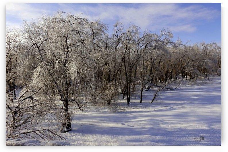Matin glacé- Iced morning by Sylvain Bergeron Photographies
