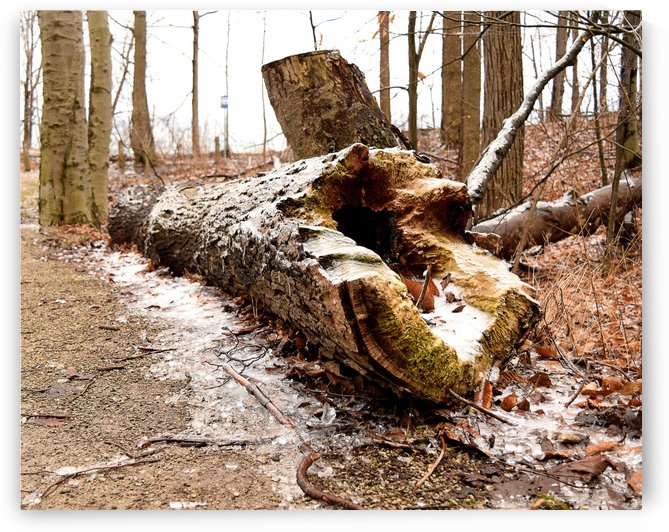 Log by Quiet Art