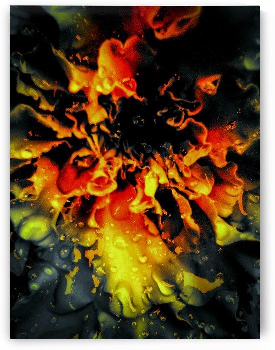 Flowering Inferno by Jeremy Lyman